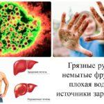 Источник инфекции вируса гепатита А