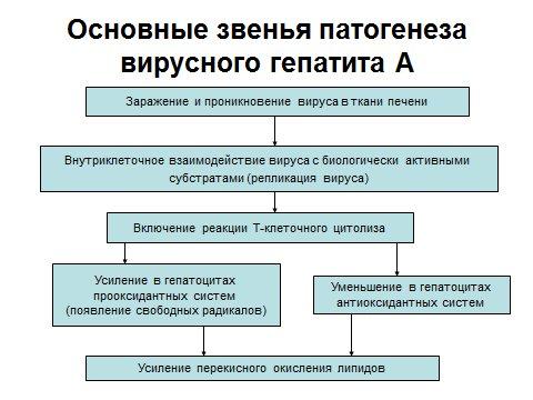патогенез гипотатита А